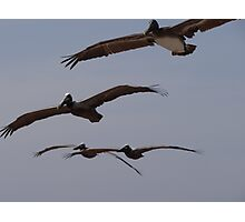 Pelican's Squadron - Flotilla De Pelicanos Photographic Print