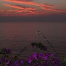 Sunset Is Over - Puesta Del Sol Termino by Bernhard Matejka