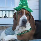 Shango is ready for St. Patrick's Day by nosajnybor