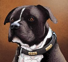 Staffordshire bull terrier 2 by Carl Conway