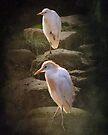 Great White Heron by Carol Bleasdale
