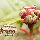 No Matter How Long Winter Is... (Card) by Tracy Friesen