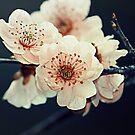 Spring 2 by ANDREA SIDENSTRICKER