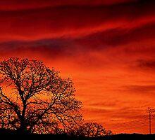 Sunrise by ANDREA SIDENSTRICKER