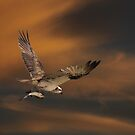 A Wing & A Fish by byronbackyard