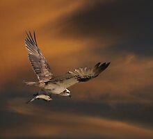 A Wing & A Fish by byronbackyard