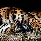 Jaguar two by pcfyi