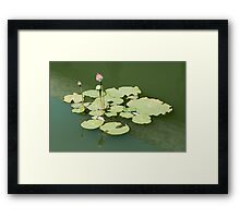 Lotus in the water Framed Print