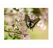 Swallowtail Butterfly with lilac Art Print