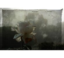 The White Rose In Fog Photographic Print