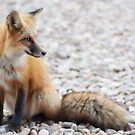 fox force I by punchdrunklove
