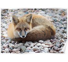 fox force III Poster
