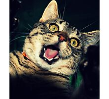 Roarrrr!!!! Photographic Print