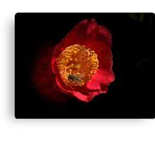 Camellia on Black Canvas Print