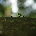 Leaf Cutting marching ants by jorginho