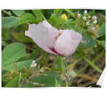 Blowing Petals - Little Opium Poppy! Poster