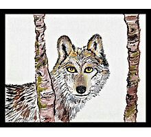 The cunning wolf Photographic Print