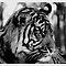 Wild Animals ~ Canon EOS Cameras Only