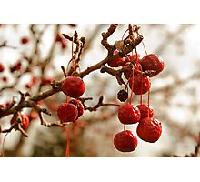 Drooping Berries Photographic Print