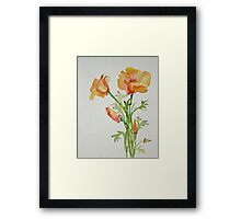 Bunch of California Poppies Framed Print