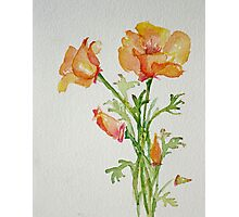 Bunch of California Poppies Photographic Print