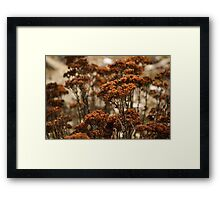 Forest of Dried Flowers Framed Print