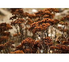 Forest of Dried Flowers Photographic Print
