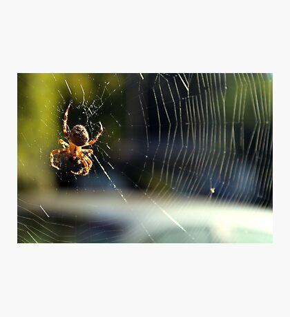 Pumpkin Spider Photographic Print