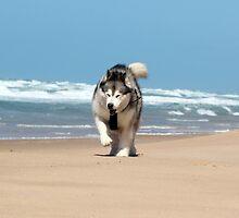 Seaspray Beach 3 by WolfieRankin