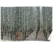 Rows and Rows and Rows and Rows of Trees Poster