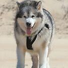 Wolf of the Desert by WolfieRankin