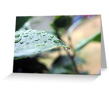 Drop of Rain Greeting Card