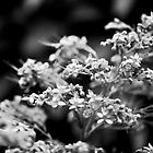 Flower sprig in black and white by Janette Anderson