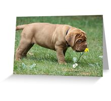 Dogue de Bordeaux Puppy Stops and Smells the Flowers Greeting Card