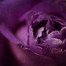 Deep Purple by Barb Leopold