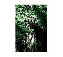 Lush Bamboo Forest Art Print