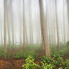 Mystical Wood  by MartinWilliams