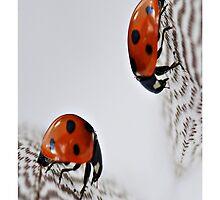 Doppeltes Glück by Aviana