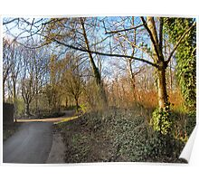 The winding paths of Birchwood..  Poster