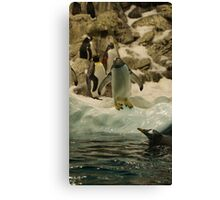 Young Penguin Canvas Print