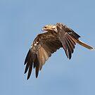 Kite in Flight by smylie