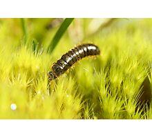 Caterpillar on moss Photographic Print