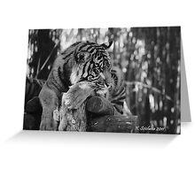tiger portrait b/w 3 Greeting Card
