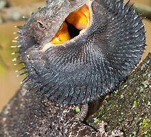 Bearded Dragon - Queensland Australia by Barry Armstead