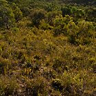 Anglesea Heathlands by Ben Cordia