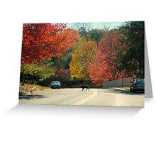 Fall Walk in my Neighborhood-Virginia     ^ Greeting Card