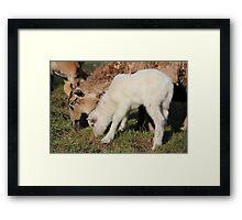 I Want Milk, Not Grass. Framed Print