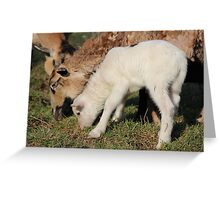 I Want Milk, Not Grass. Greeting Card