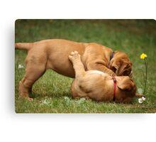 dogue de bordeaux puppies playing Canvas Print