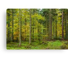 Autumn in the Forest Canvas Print
